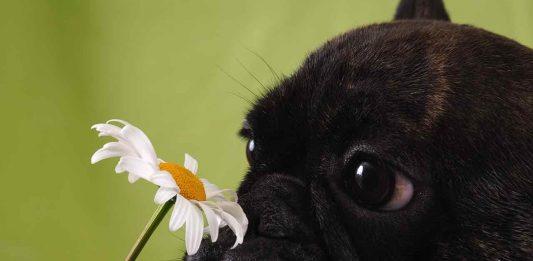 Perros y los olores - Mascotas