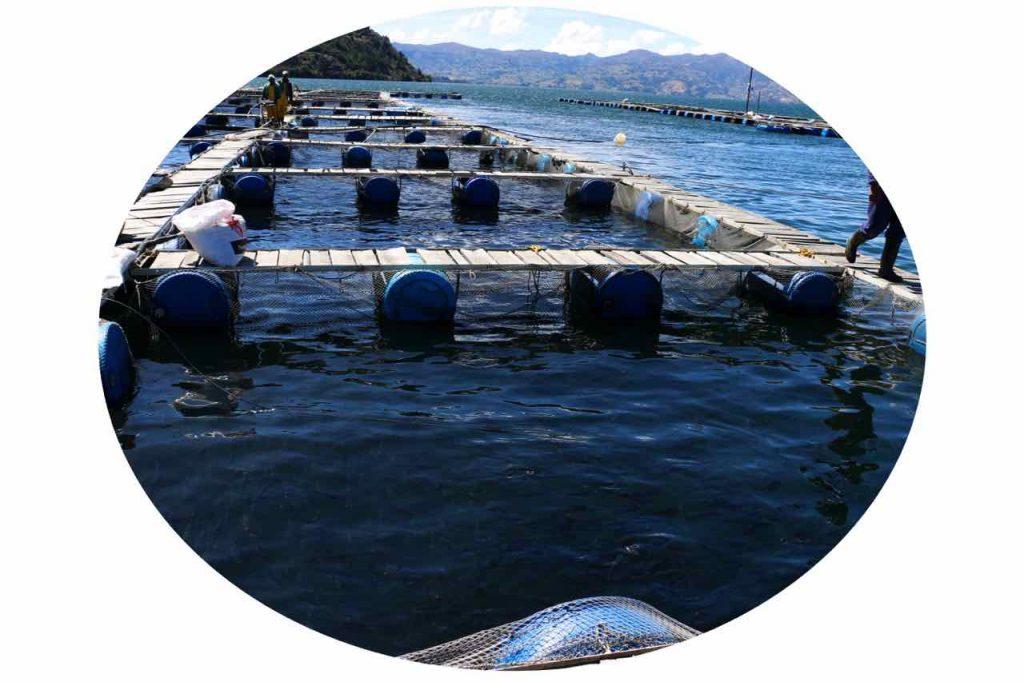 Truchicultura en el Lago de Tota