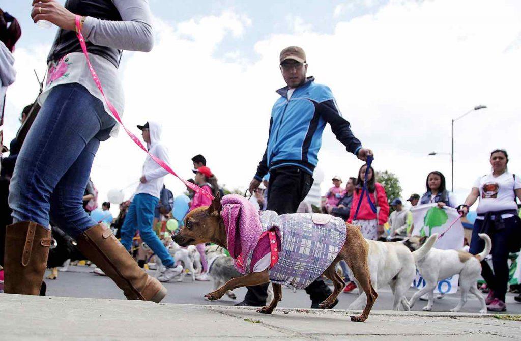 Donaton de mascotas en Duitama
