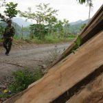 Masacre ambiental en la Serranía de las Quinchas 2