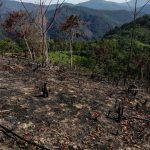 Masacre ambiental en la Serranía de las Quinchas 3