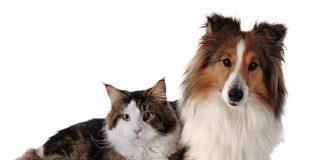 mascotas perro y gato