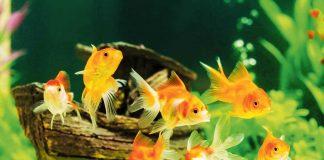 peces en el agua