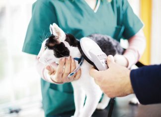 Mascotas con Chip Gato