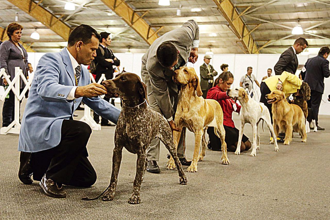 Antes de adoptar mascota, los expertos recomiendan conocer la compatibilidad de las razas de perros y gatos con los niños del hogar.