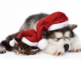 Las mascotas también pueden disfrutar de la Navidad de una forma segura.