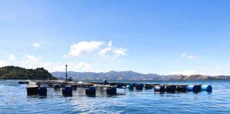 284 jaulas de truchas instaladas, con una ocupación de 16.042 metros cuadrados existe en el lago de Tota.