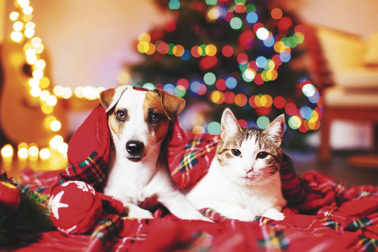 Lo más importante en esta época cargada de festividades es cuidarlos emocionalmente, ya que las festividades les puede ocasionar estrés.