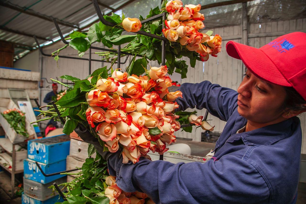 Flores de Boyacá para celebrar San Valentín 1