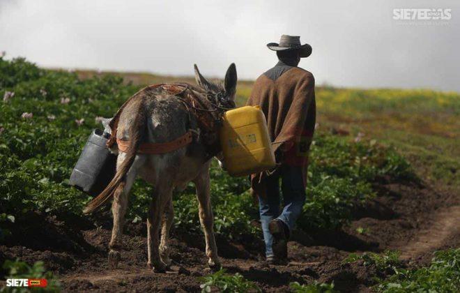 """""""La alimentación de todos los colombianos y colombianas está en las manos de los campesinos y campesinas de Colombia """" Comunicado-Convocatoria-Carta 5"""