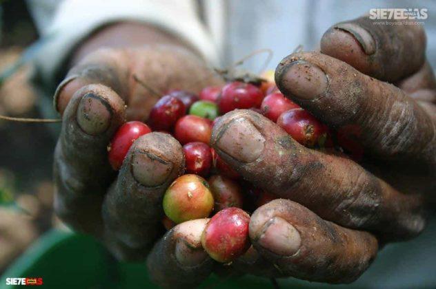 """""""La alimentación de todos los colombianos y colombianas está en las manos de los campesinos y campesinas de Colombia """" Comunicado-Convocatoria-Carta 9"""