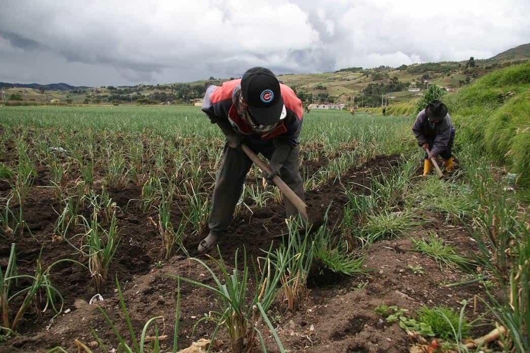 Empresas se unen para transformar digitalmente el conocimiento del sector agropecuario Colombiano 1