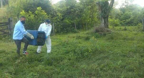 ¿Y qué está haciendo Corpoboyacá por la por la protección de los recursos naturales? 4