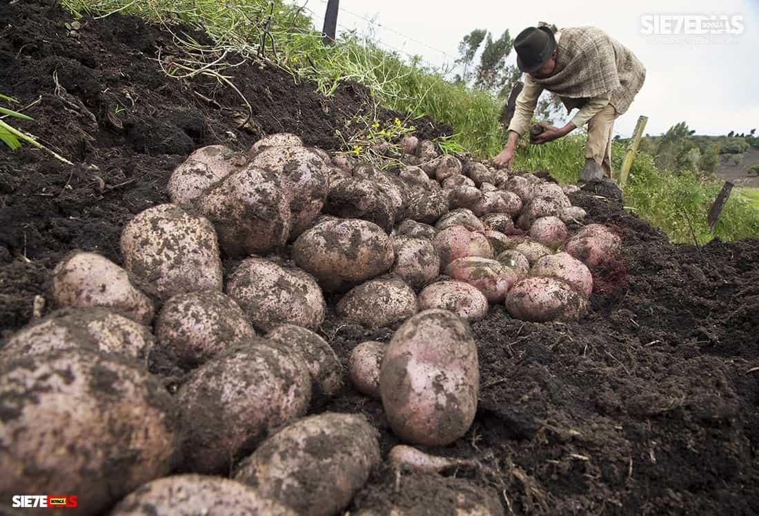 Aquí están los anuncios del Ministerio de Agricultura para el campo boyacense y del país, en medio de la pandemia #LaEntrevista 3