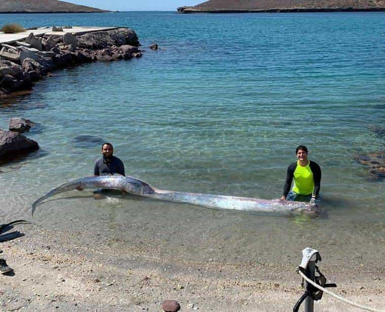 El 11 de junio de 2020 se encontró este pez en Cozumel México. Foto. Archivo Particular