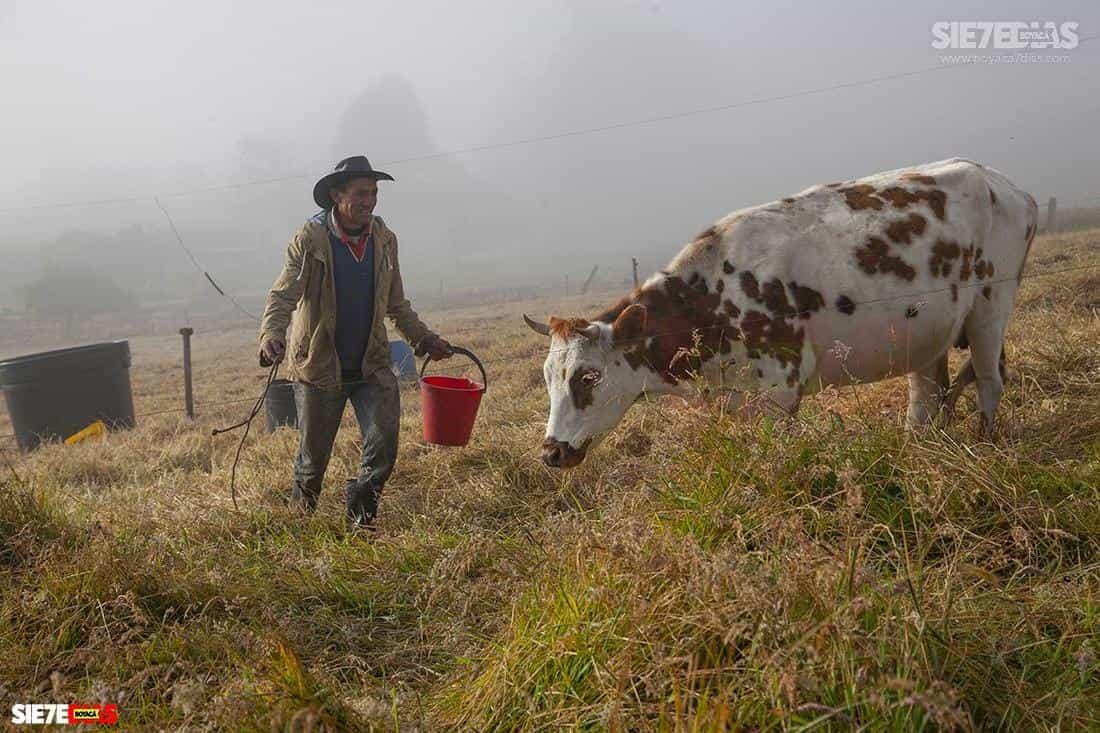 Aunque Boyacá viene creciendo, por ejemplo, en la producción de leche, hay otros departamentos que vienen creciendo más rápido. Hace 10 años Boyacá era el tercer productor y hoy es el quinto.