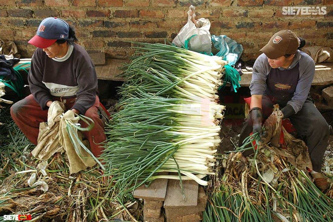 El mismo secretario de Agricultura de Boyacá reclama al Gobierno nacional para que reevalúe la decisión de recortarle recursos al sector del agro para el 2021, en vez de estimularlo por los resultados en medio de la pandemia.