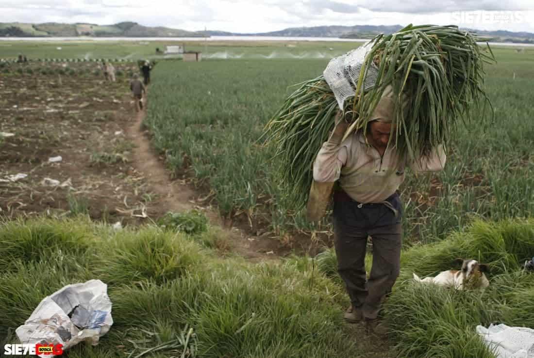 La respuesta del procurador ambiental a productores de trucha y de cebolla #Tolditos7días 1
