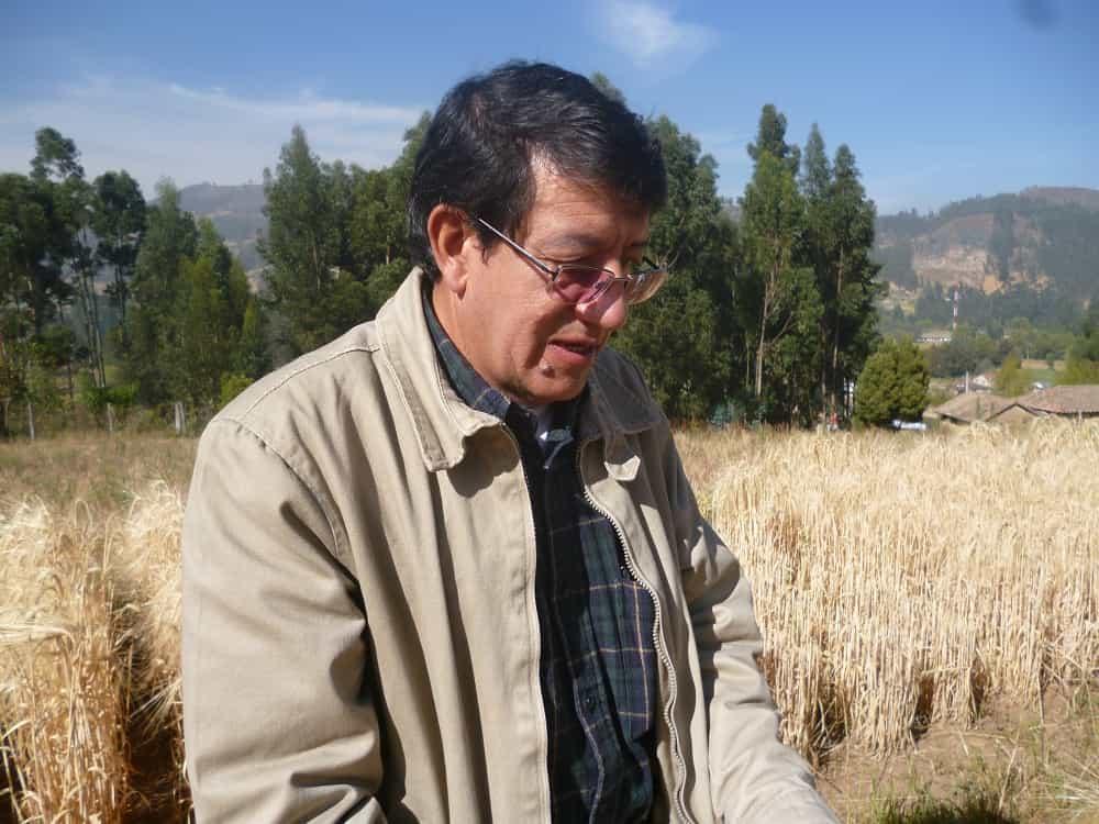 De su cosecha, el ingeniero agrónomo Jaime Fernández cuenta en un libro la historia del cultivo de cebada en el país 2