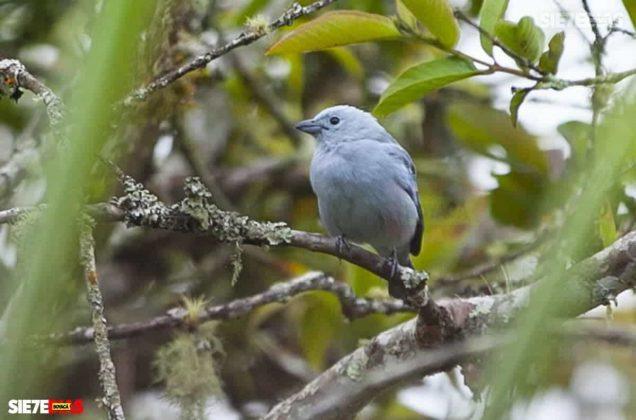 [Galería] 'Reserva forestal El Bosque' un encanto natural de Miraflores Boyacá #AlNatural 1