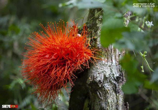 [Galería] 'Reserva forestal El Bosque' un encanto natural de Miraflores Boyacá #AlNatural 2