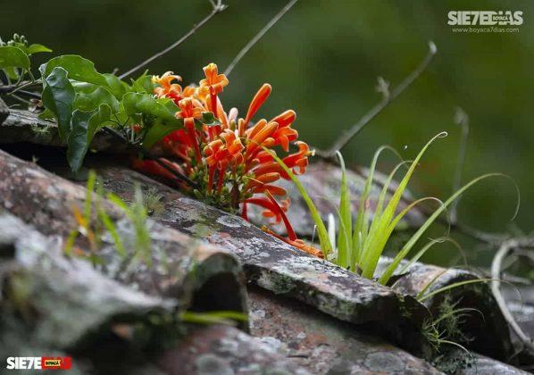 [Galería] 'Reserva forestal El Bosque' un encanto natural de Miraflores Boyacá #AlNatural 4