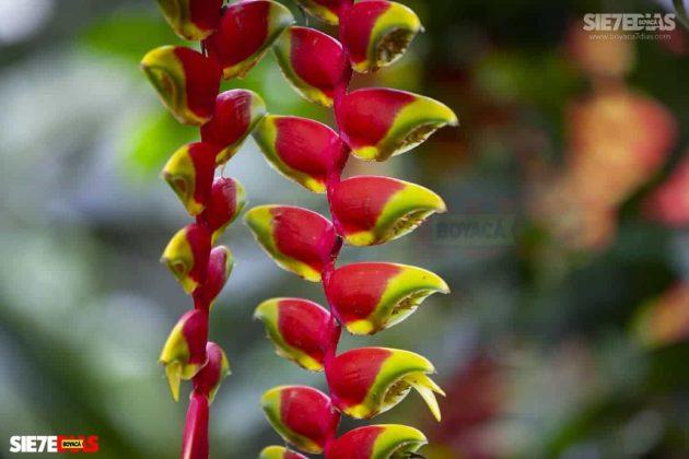 [Galería] 'Reserva forestal El Bosque' un encanto natural de Miraflores Boyacá #AlNatural 9