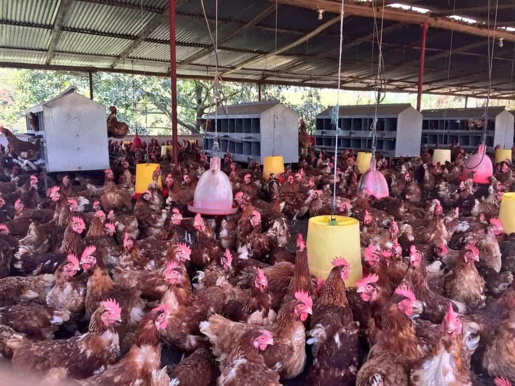 Le exige al ICA monitorear las granjas agrícolas, avícolas y piscícolas del lago de Tota. Foto: archivo particular