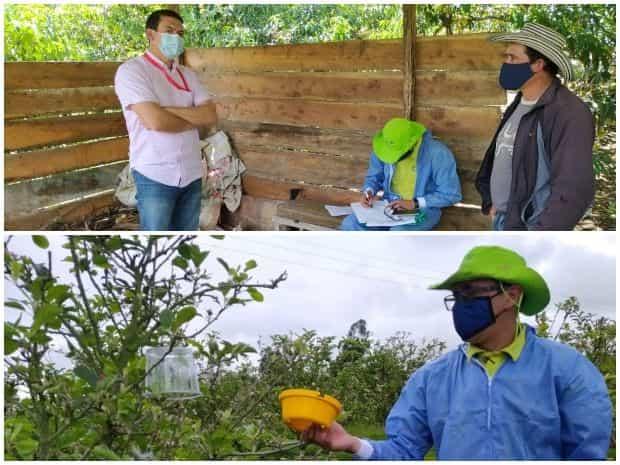 Técnicos del ICA y personal de la Alcaldía de Jenesano vienen adelantando el seguimiento para evitar que se siga multiplicando la llamada mosca de la fruta. Foto: Archivo Particular