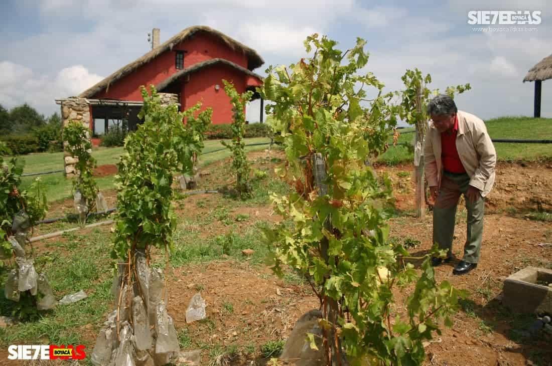 Quijano Rico les enseñó a cultivar vides a varios campesinos de Boyacá. Aquí en su viñedo. Foto: archivo Boyacá Sie7e Días