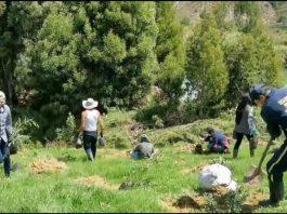Voluntarios de Clever Leaves sembraron 500 árboles de especies nativas en la vereda Tobacá, en el municipio de Pesca. Fotos: archivo particular
