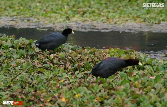 [Galería] - Laguna de Fúquene, hábitat de peces, crustáceos, anfibios y más de 150 especies de aves entre endémicas, amenazadas y migratorias. #AlNatural 1
