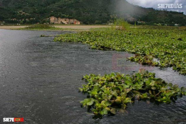 [Galería] - Laguna de Fúquene, hábitat de peces, crustáceos, anfibios y más de 150 especies de aves entre endémicas, amenazadas y migratorias. #AlNatural 10