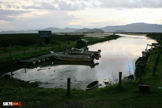 [Galería] - Laguna de Fúquene, hábitat de peces, crustáceos, anfibios y más de 150 especies de aves entre endémicas, amenazadas y migratorias. #AlNatural 8