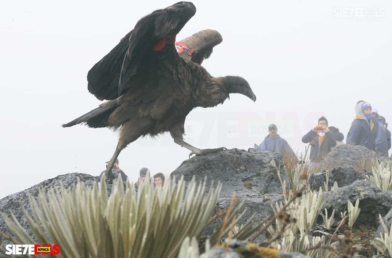 [Galería] - Boyacá, el encumbrado nido del cóndor de los andes 3