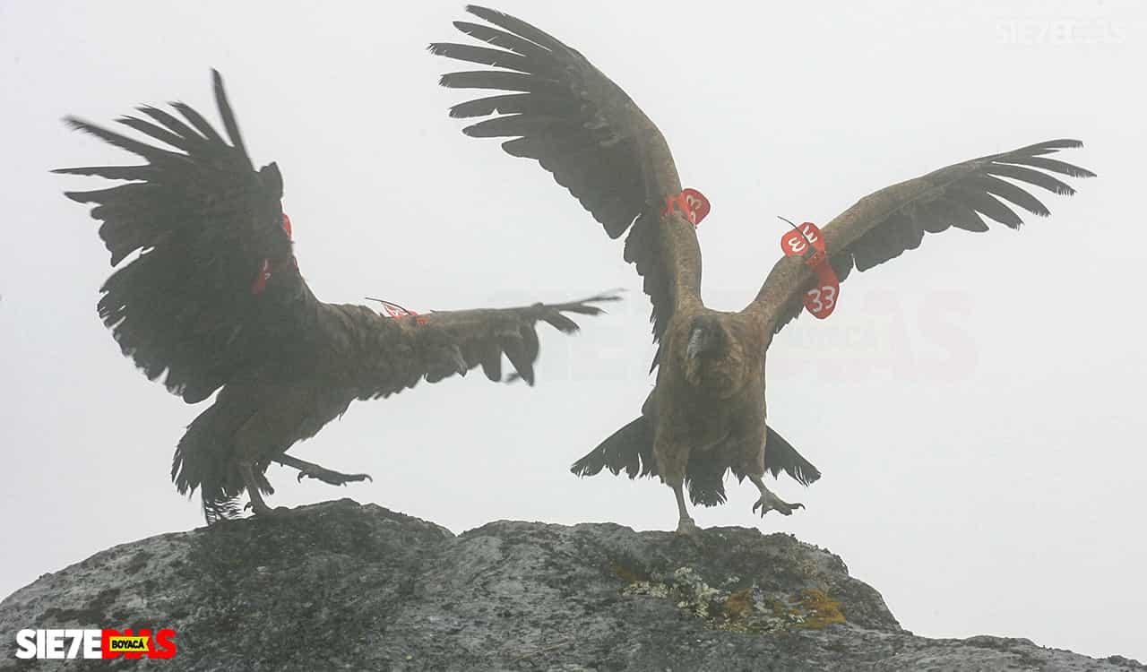[Galería] - Boyacá, el encumbrado nido del cóndor de los andes 4