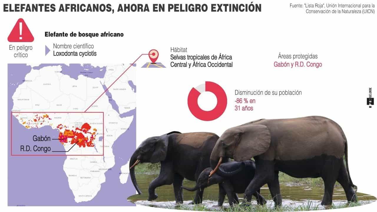 [Infografía] - Elefantes africanos, ahora en peligro de extinción 1