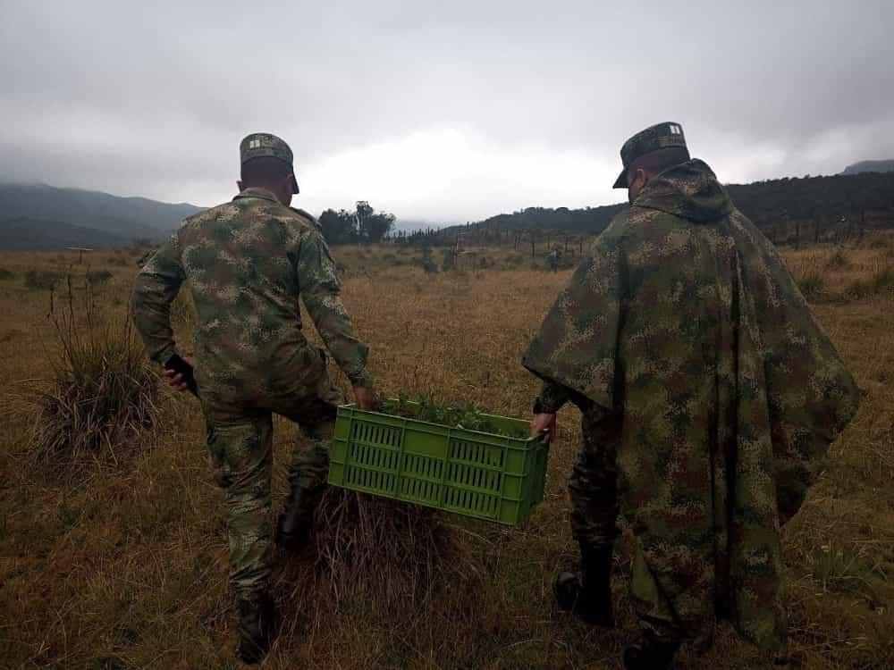 En Operación Artemisa, el Batallón Tarqui dio golpe a la deforestación plantando frailejones en Socha 1