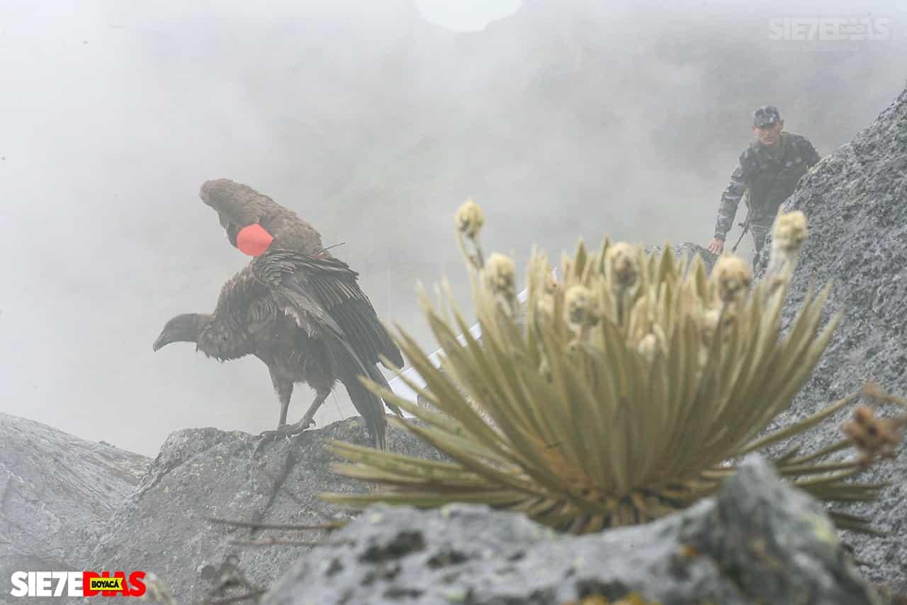 [Galería] - Boyacá, el encumbrado nido del cóndor de los andes 1