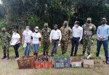 Los soldados de la Primera Brigada del Ejército Nacional han sembrado a la fecha en Boyacá 50.295 plantas, entre especies nativas y frailejones. Fotos: archivo particular