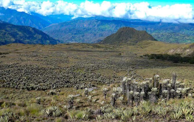 [Galería] - El páramo de Chiscas, uno de los más conservados del departamento de Boyacá - #AlNatural 2