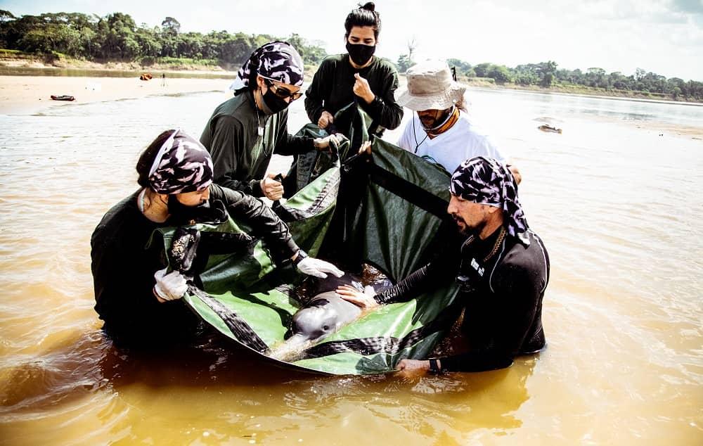 Primera expedición científica para analizar abundancia de delfines de río desde que empezó la pandemia 2