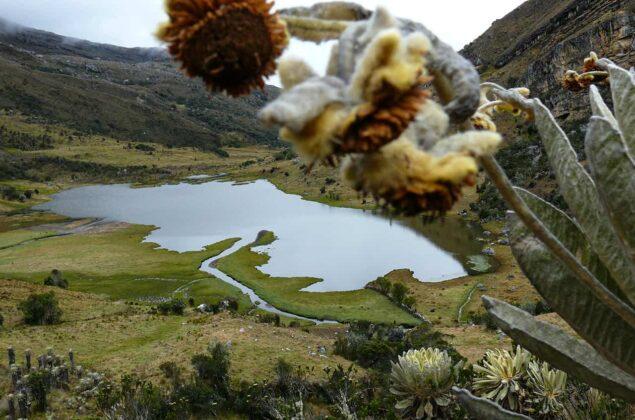 [Galería] - El páramo de Chiscas, uno de los más conservados del departamento de Boyacá - #AlNatural 11