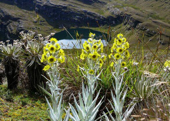 [Galería] - El páramo de Chiscas, uno de los más conservados del departamento de Boyacá - #AlNatural 9