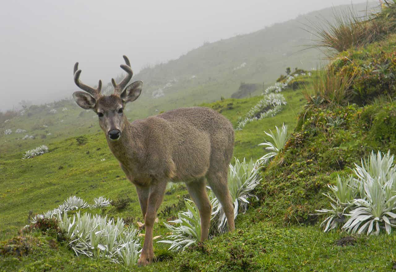 [Galería] - El páramo de Chiscas, uno de los más conservados del departamento de Boyacá - #AlNatural 1
