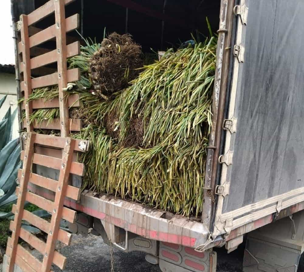 Más de 20 mil millones de pesos en pérdidas deja el paro para el sector agropecuario de Boyacá 2