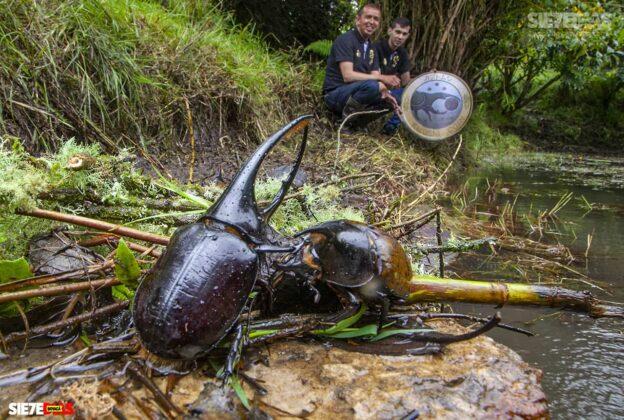 [Galería] - El hogar de los escarabajos, un sitio para desestresarse en medio de la pandemia #AlNatural 1