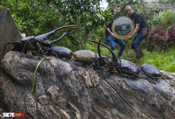 [Galería] - El hogar de los escarabajos, un sitio para desestresarse en medio de la pandemia #AlNatural 7