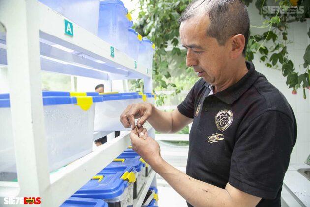 [Galería] - El hogar de los escarabajos, un sitio para desestresarse en medio de la pandemia #AlNatural 3