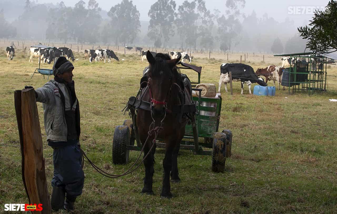 Boyacá, el segundo departamento que más pérdidas registra en el sector ganadero 1